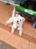 hund med royaltyfri fotografi