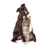 Hund med armen runt om katt Arkivfoto
