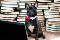 Hund med bärbara datorn och böcker Arkivbilder