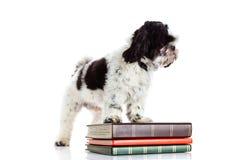 Hund med böcker på vit bakgrund Arkivbilder