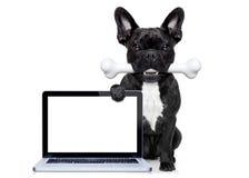 Hund med ben Arkivbilder