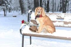 Hund med blommor i snön 2018 fotografering för bildbyråer