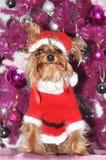 Hund med den Santa Claus dräkten Royaltyfri Bild