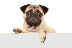 Hund med det tomma brädet Royaltyfri Fotografi
