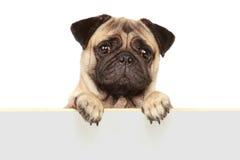 Hund med det tomma brädet Fotografering för Bildbyråer