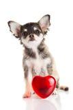 Hund med förälskelsebegrepp som isoleras på vit bakgrund Arkivbild