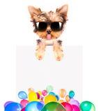 Hund med feriebanret och färgrika ballonger Arkivbilder