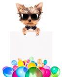 Hund med feriebanret och färgrika ballonger Royaltyfria Bilder