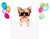 Hund med feriebanret och färgrika ballonger Fotografering för Bildbyråer