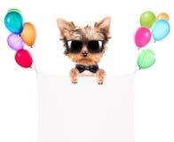 Hund med feriebanret och färgrika ballonger Arkivfoto
