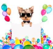 Hund med feriebanret och färgrika ballonger Royaltyfria Foton