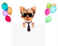 Hund med feriebanret och färgrika ballonger Arkivbild