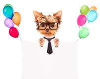 Hund med feriebanret och färgrika ballonger Royaltyfri Fotografi