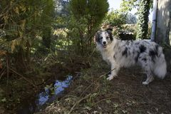 Hund med floden royaltyfri fotografi