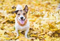 Hund med lyckligt och tacksamt framsidauttryck på nedgånghöstsidor som ett tacksägelsebegrepp royaltyfri bild