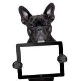 Hund med minnestavlaPC royaltyfria bilder