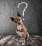 Hund med retsamt uttryck arkivfoton