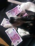 Hund med sedlar Fotografering för Bildbyråer