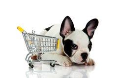 Hund med shoppingtrollyen som isoleras på vit bakgrund Arkivfoto