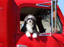 Hund med skyddsglasögon. Arkivfoto