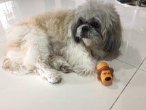 Hund med toyen Royaltyfri Bild