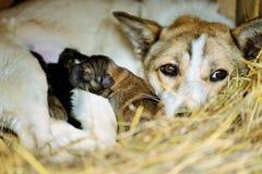 Hund med valpar Royaltyfria Foton