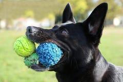 Hund mit 3 bals in seinem Mund Lizenzfreie Stockfotos