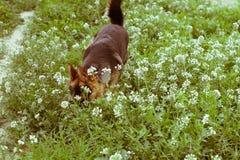 Hund mit Blumen Stockfotografie