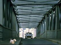 Hund mit Brücke Stockfotografie