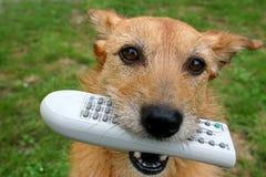 Hund mit dem Fernsteuerungs in ihrem Mund Stockfotografie