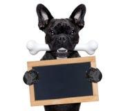 Hund mit dem Knochen Stockfotografie