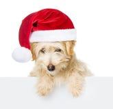 Hund mit dem roten Weihnachtshut, der von hinten leeres Brett späht und Kamera betrachtet Getrennt auf weißem Hintergrund Lizenzfreie Stockfotografie
