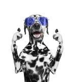 Hund mit den Gläsern, die sich Daumen und Willkommen zeigen Isolat auf Weiß Lizenzfreies Stockfoto