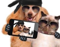 Hund mit der Katze, die ein selfie zusammen mit einem Smartphone nimmt Lizenzfreie Stockfotos