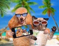 Hund mit der Katze, die ein selfie zusammen mit einem Smartphone nimmt Stockfotos