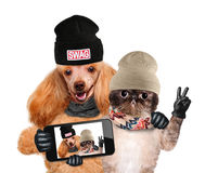Hund mit der Katze, die ein selfie zusammen mit einem Smartphone nimmt Lizenzfreies Stockbild