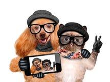 Hund mit der Katze, die ein selfie zusammen mit einem Smartphone nimmt Lizenzfreie Stockbilder