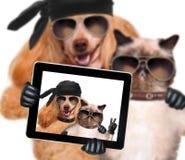 Hund mit der Katze, die ein selfie zusammen mit einer Tablette nimmt Lizenzfreies Stockfoto