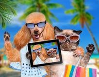 Hund mit der Katze, die ein selfie zusammen mit einer Tablette nimmt Stockfotos