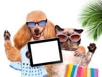 Hund mit der Katze, die ein selfie zusammen mit einer Tablette nimmt Lizenzfreie Stockbilder