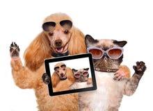Hund mit der Katze, die ein selfie zusammen mit einer Tablette nimmt Stockbild