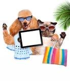 Hund mit der Katze, die ein selfie zusammen mit einer Tablette nimmt Lizenzfreies Stockbild