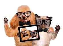 Hund mit der Katze, die ein selfie zusammen mit einer Tablette nimmt Stockfoto