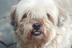 Hund mit Durty stellen gegenüber Stockfotografie