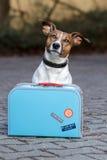 Hund mit einem blauen Beutel lizenzfreies stockfoto
