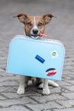 Hund mit einem blauen Beutel Stockfotografie