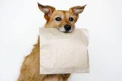 Hund mit einem braunen Beutel Lizenzfreies Stockfoto