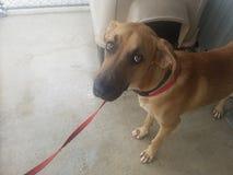 Hund mit einem Graben umgegeben am Tötung-Schutz stockbilder