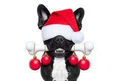 Hund mit einem Knochen für Weihnachten stockfotografie