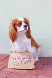Hund mit einem Pappzeichen Stockfotos